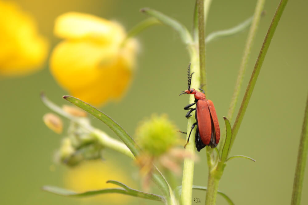 Funny red bug